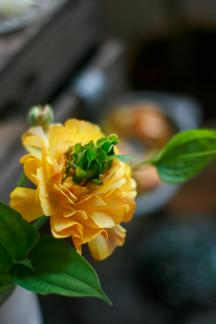 ・おはな咲く咲く_b0209477_176366.jpg