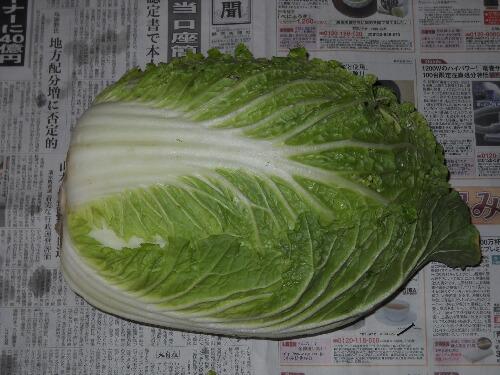 子持ち高菜の頂花蕾と味&晩生白菜の収穫_f0018078_1828032.jpg