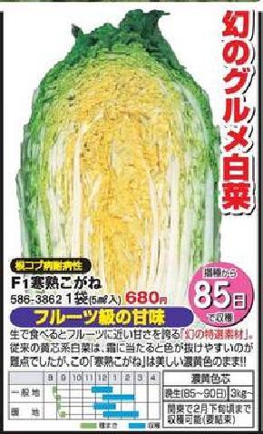 子持ち高菜の頂花蕾と味&晩生白菜の収穫_f0018078_1833741.jpg