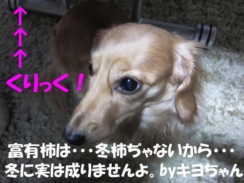 b0200291_20562787.jpg