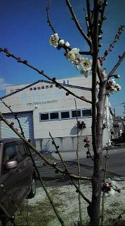 2月10日 春近し!_e0196522_131321.jpg