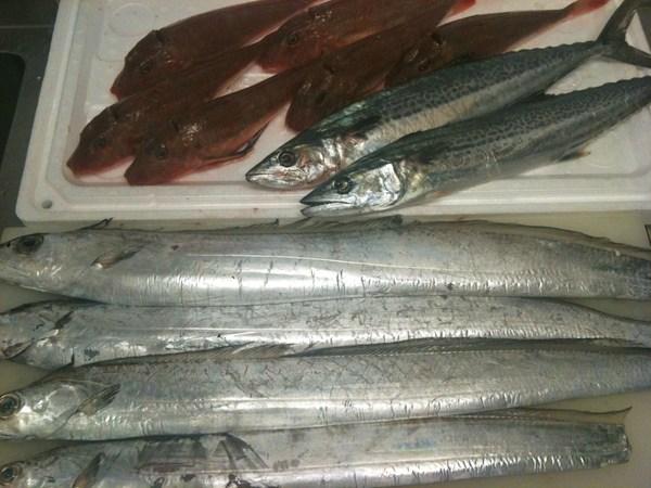 淡路島直送の魚 ③_e0210422_169812.jpg