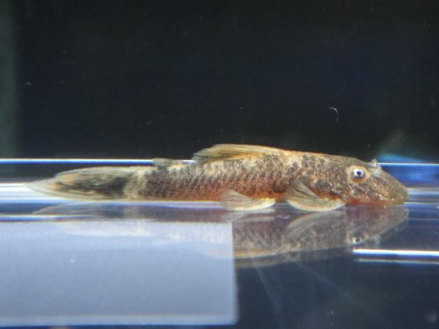 熱帯魚・水草_f0189122_13241190.jpg