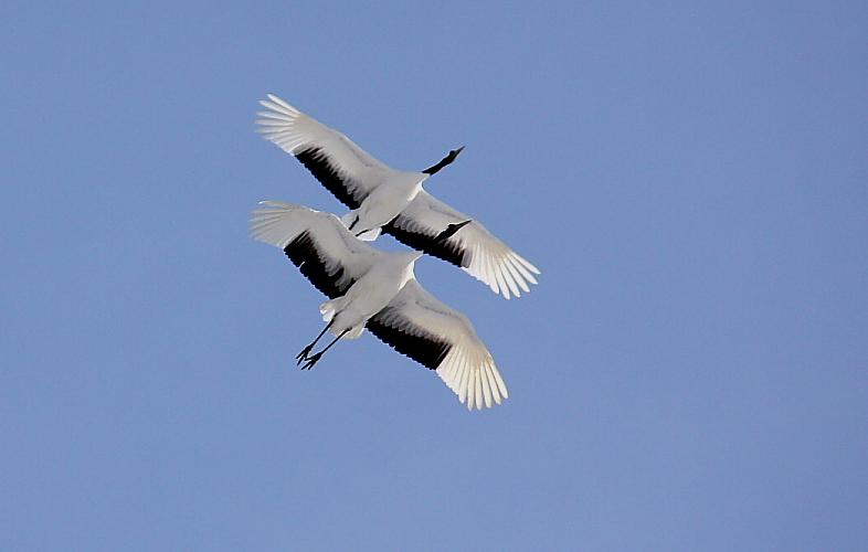 空を飛ぶ ~白~ 2月10日_f0113639_14444982.jpg