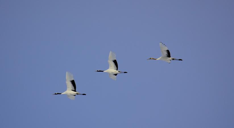 空を飛ぶ ~白~ 2月10日_f0113639_14451075.jpg