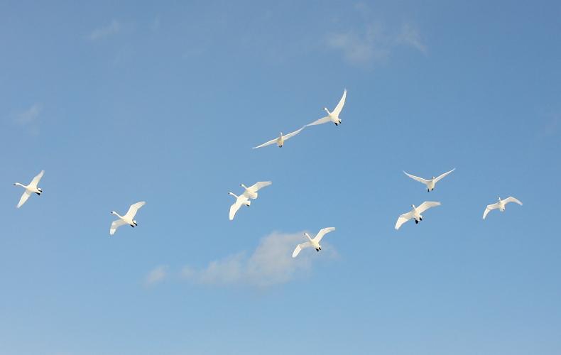空を飛ぶ ~白~ 2月10日_f0113639_14453345.jpg