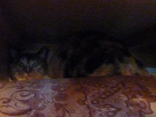 猫のお友だち はなちゃんふうちゃん編。_a0143140_21442576.jpg