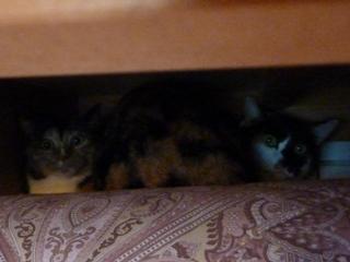 猫のお友だち はなちゃんふうちゃん編。_a0143140_21455351.jpg
