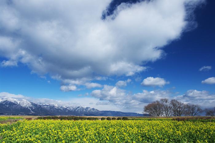 菜の花畑と比良山(滋賀・なぎさ公園)_f0155048_22252076.jpg