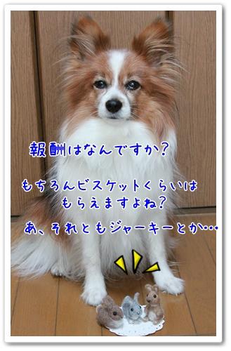 d0013149_1174744.jpg