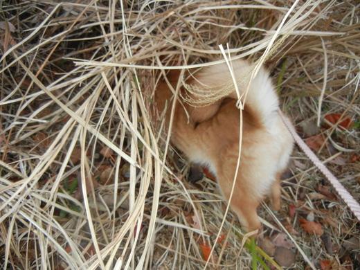 2011年2月10日(木)可愛いベィビ~♪ハイハイ♪_f0060461_1731412.jpg