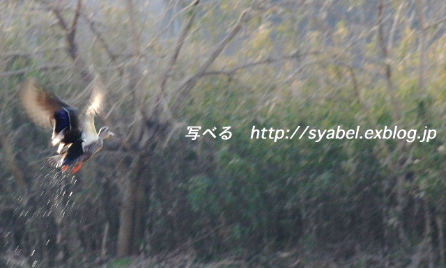c0153764_19114693.jpg