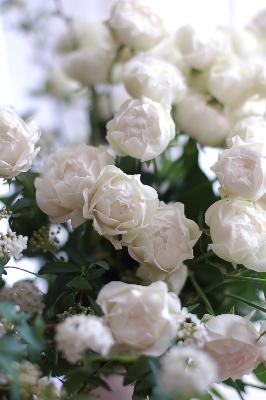 "Spray Rose \""Cotton Puff\""_f0057564_23412258.jpg"