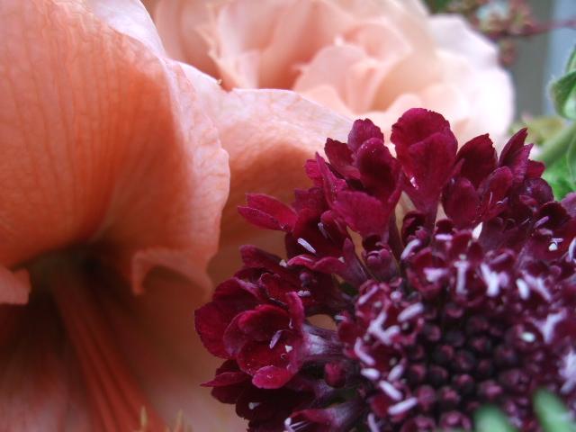 オークリーフ(アマリリス・リロナと薔薇・シュナーベルのアレンジメント)_f0049672_1119352.jpg