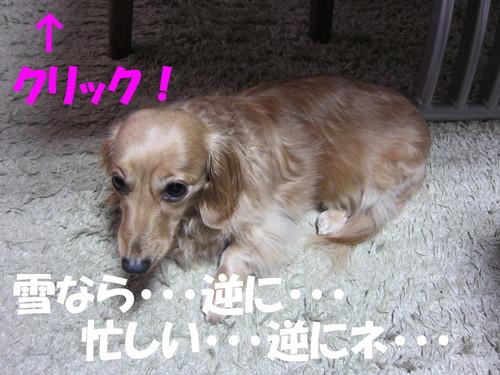 b0200291_16525992.jpg
