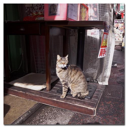#2563 中華街の猫_e0175405_6105972.jpg