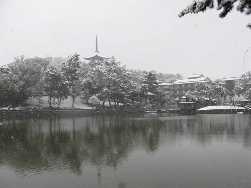 奈良のゆき_e0030917_1634058.jpg