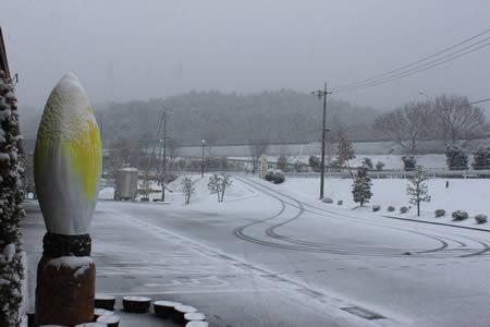 今日はちこり村も雪_d0063218_1137303.jpg