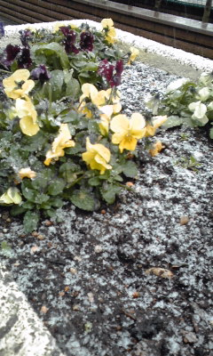 雪のふーるまーちを~_c0160822_9311786.jpg