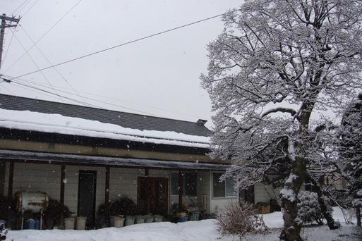 また寒くなりましたね_e0226943_1622058.jpg