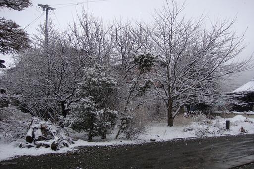 また寒くなりましたね_e0226943_1654977.jpg