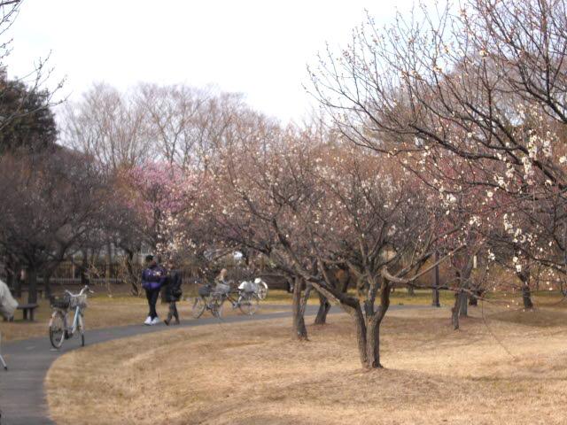 梅の香りがいっぱい・・・_d0116059_20591259.jpg