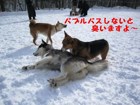 c0160878_211271.jpg