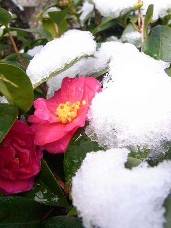 春待雪_d0169179_234052.jpg