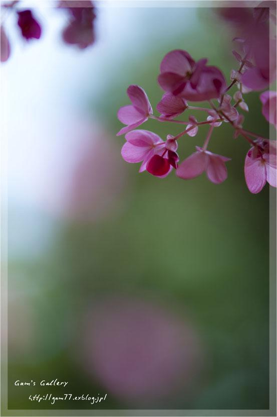 春の足音_f0195893_6353575.jpg