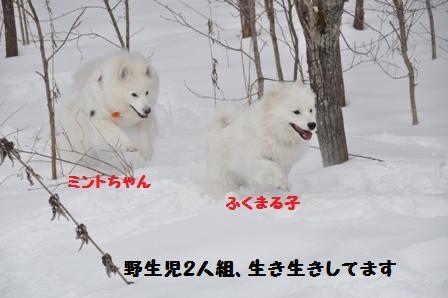 f0212597_11552130.jpg