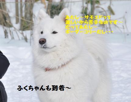 f0212597_1156482.jpg