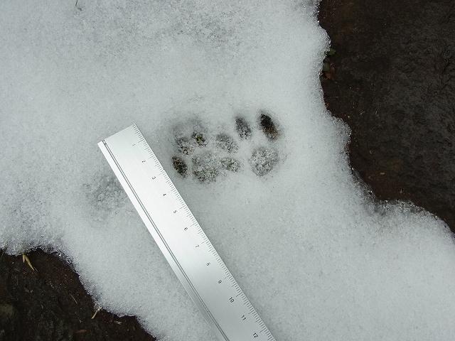雪景色のすみれば_b0049307_10541351.jpg