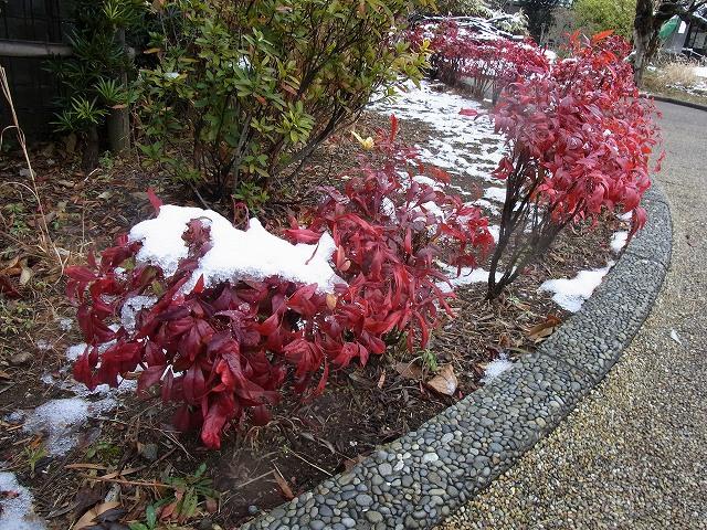 雪景色のすみれば_b0049307_1055059.jpg