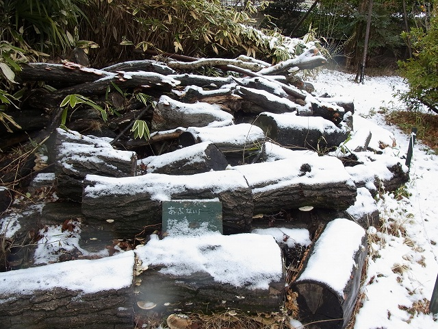 雪景色のすみれば_b0049307_10584220.jpg