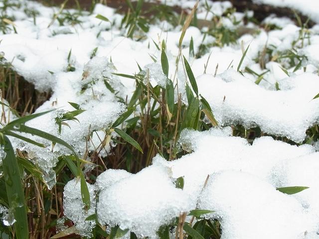 雪景色のすみれば_b0049307_10591777.jpg