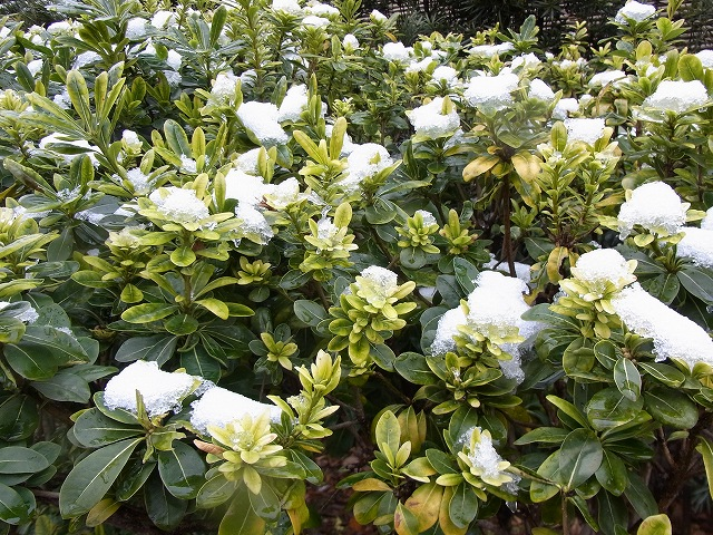 雪景色のすみれば_b0049307_10592113.jpg