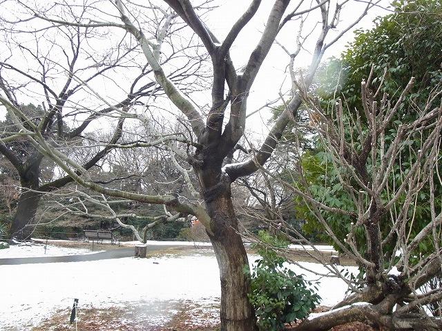 雪景色のすみれば_b0049307_1059898.jpg
