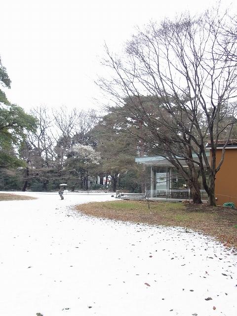 雪景色のすみれば_b0049307_1191231.jpg