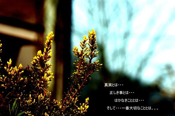 d0177607_13668.jpg