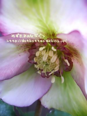 d0170109_2212442.jpg