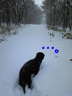 雪♪雪♪雪♪_f0148927_22312465.jpg
