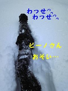 雪♪雪♪雪♪_f0148927_22342732.jpg