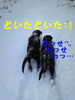 雪♪雪♪雪♪_f0148927_2240912.jpg