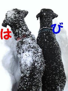 雪♪雪♪雪♪_f0148927_2245910.jpg