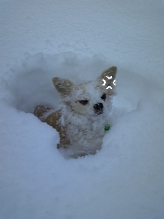 雪♪雪♪雪♪_f0148927_22514919.jpg