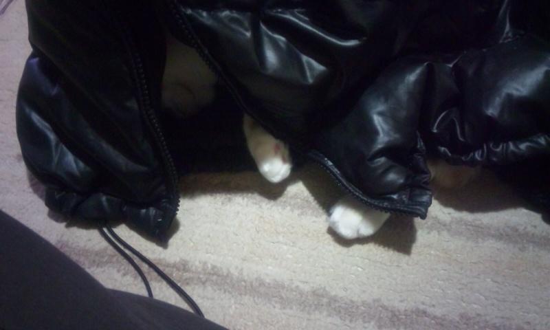 猫の捕り方_b0019333_21345692.jpg