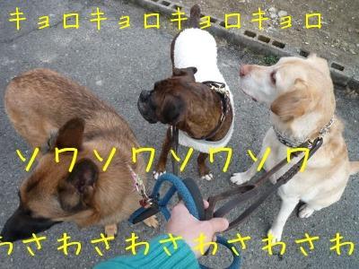 f0177261_18155887.jpg