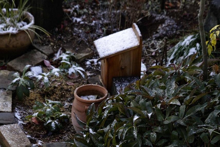 雪が積もった今朝、紅梅にメジロさんが♪^^_a0107574_7534982.jpg