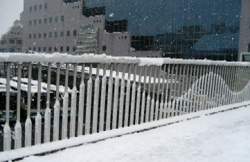 雪♪      _c0009275_22292656.jpg