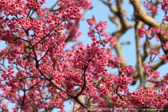 桜便り 第2弾  ☆ ハプニング♪_c0139375_13555460.jpg